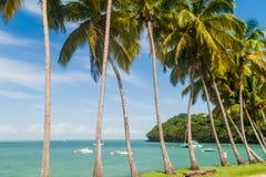 Paumes le long de la côte d'Ile Royale en Guyane française française photo stock