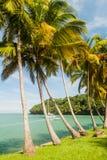Paumes le long de la côte d'Ile Royale en Guyane française française photographie stock libre de droits