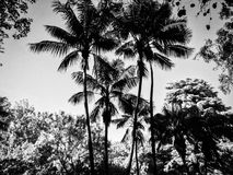 Paumes noires et blanches photo libre de droits