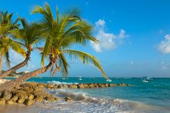 Paumes pliées sur le rivage de l'océan au coucher du soleil Plage de Worthing en Barbade photos stock