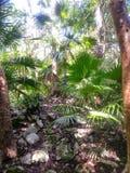Paumes sauvages s'élevant sur la chaux dans la jungle maya Photo libre de droits