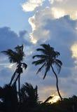 Paumes silhouettées dans San Pedro, Belize Images libres de droits