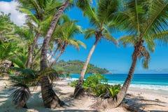 Paumes sur la belle plage de la Jamaïque images stock