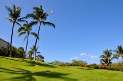 Paumes sur la pelouse Photos libres de droits