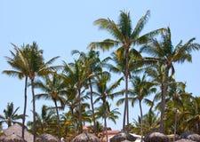 Paumes sur la plage Photographie stock libre de droits