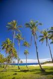 Paumes sur la plage de l'île de Pâques Photos libres de droits