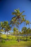 Paumes sur la plage de l'île de Pâques Photographie stock