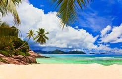 Paumes sur la plage tropicale Photo stock