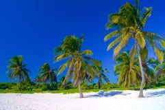Paumes sur une plage blanche Images stock