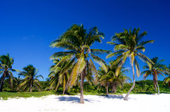 Paumes sur une plage blanche Photographie stock