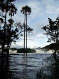 Paumes sur une rivière images libres de droits