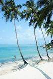 Paumes tropicales. Images stock