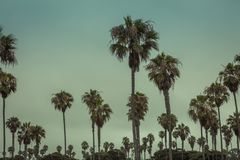 Paumes tropicales contre un ciel bleu clair image libre de droits