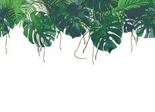 Paumes tropicales de vecteur, usines, feuille, feuillage, monstera illustration libre de droits
