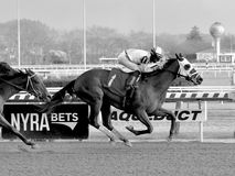 Pauseforthecause winning at Aqueduct Racetrack royalty free stock image
