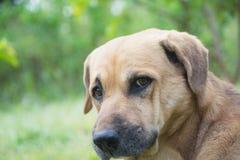 Pauvre chien sans abri regardant quelqu'un avec un extérieur en nature Images stock