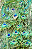 Pauw feathers2 Royalty-vrije Stock Afbeeldingen