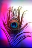 Pauwvader met abstracte kleurrijke in de schaduw gestelde Achtergrond Vector illustratie stock illustratie