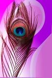 Pauwvader met abstracte kleurrijke in de schaduw gestelde Achtergrond Vector illustratie vector illustratie