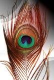 Pauwvaders met abstracte vector multicolored in de schaduw gestelde Achtergrond Vector illustratie royalty-vrije stock fotografie