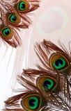 Pauwvaders met abstracte vector multicolored geweven in de schaduw gestelde Achtergrond Vector illustratie Royalty-vrije Stock Foto's