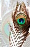 Pauwveer op de witte geweven achtergrond van de pauwveer stock fotografie