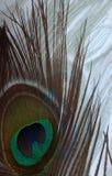 Pauwveer op de witte geweven achtergrond van de pauwveer stock foto's