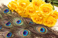 Pauwveren en rozen stock foto