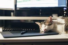 Pauze op het werk: kattenslaap op toetsenbord stock foto's