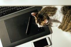 Pauze op het werk: kattenslaap op toetsenbord stock fotografie