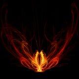 Pavão do incêndio Imagens de Stock Royalty Free