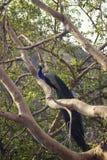 Pavão em uma árvore foto de stock