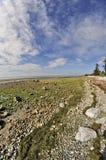 Pavés ronds et algue sur la plage Photographie stock