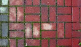 Pavés rouges avec de la mousse entre eux photos libres de droits