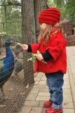 Pavões bonitos da alimentação de crianças Imagem de Stock Royalty Free