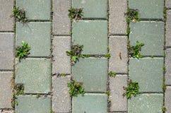 Pavage de la texture concrète de pavés ronds Image libre de droits
