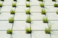 Pavage des pavés ronds concrets avec des trous pour l'herbe Images libres de droits