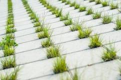 Pavage des pavés ronds concrets avec des trous pour l'herbe Image stock