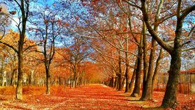Pave Covered on Red Leaf Between Trees Stock Image