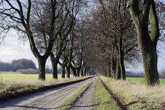 Paved alley with trees Stock Photos