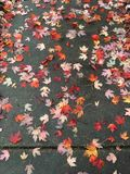 Scattered sidewalk leaves royalty free stock images