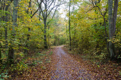 Paved footpath in autumn colors. Paved footpath in a forest with autumn colors Royalty Free Stock Photography