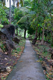 Paved footpath in the jungles Royalty Free Stock Images