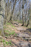 Paved Forest Pathway Stock Photos