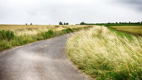 Paved lane on the countryside through cornfields stock images