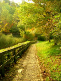 Paved park paths. In autumn royalty free stock photo