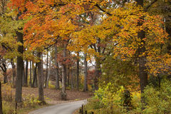 Paved path through the autumn colored woods. Stock Photos