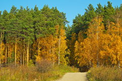 Paved path in the autumn forest Stock Photography