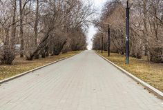 A paved path with gray and red paving slabs with yellow leaves and a group of black and white street lighting lanterns among trees. A paved path with gray and royalty free stock photos