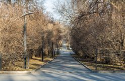 A paved path with gray and red paving slabs with yellow leaves and a group of black and white street lighting lanterns among trees. A paved path with gray and royalty free stock photo